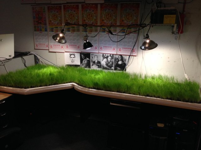A desktop is grown with grass... I want this so bad! Source: http://imgur.com/a/U0TYY